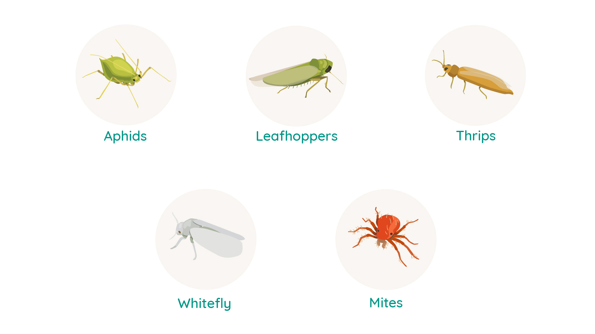 Aphids, Thrips, Mites: Pest control of sucking pests requires several measures to be taken. This blog presents the main options open to you