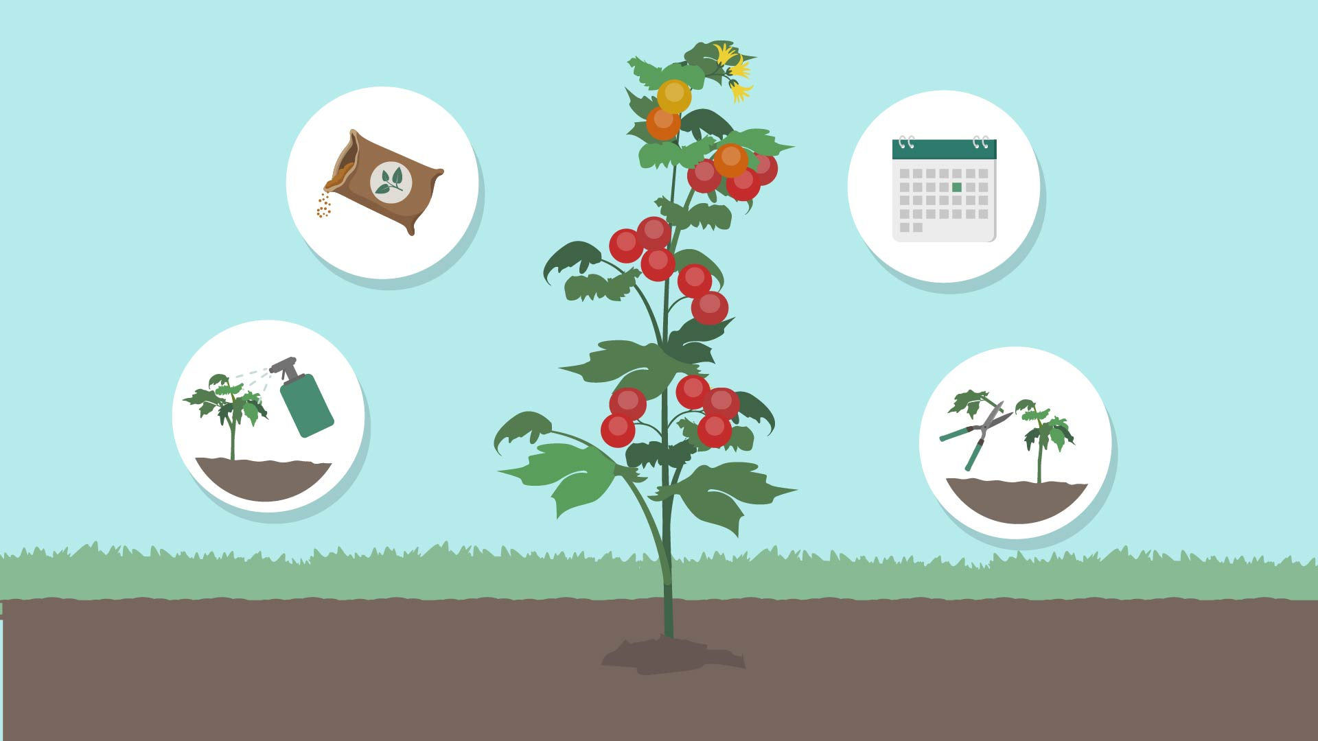 Especially for tomatoes, vegetable farming in India is viable all year round.